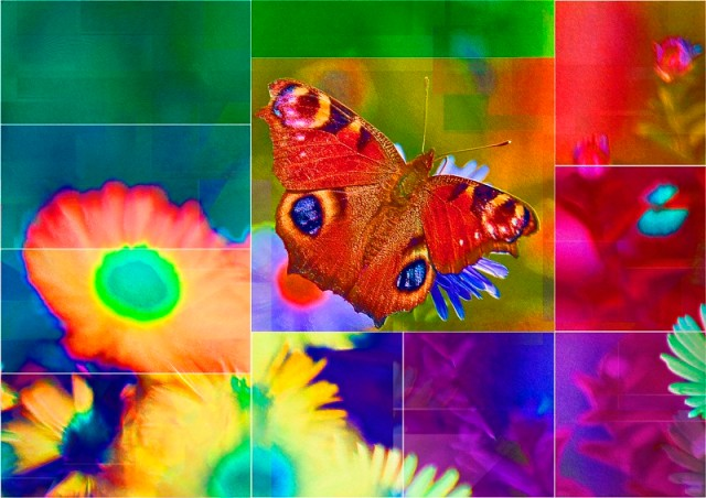 Butterfly_PhotoArt