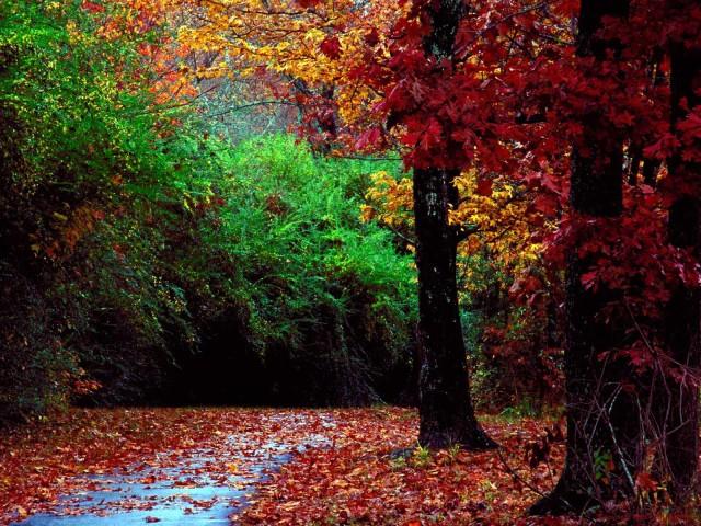 free-autumn-background